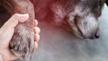 Carolina del Norte el tercer estado con más mascotas sacrificadas en refugios