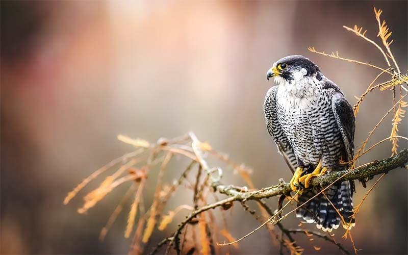 Reabren centro de aves rapaces en Carolina del Norte