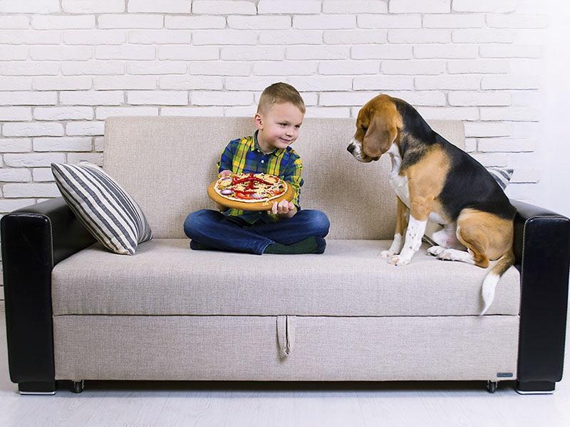 razas-de-perros-mas-amigables-para-tener-en-casa
