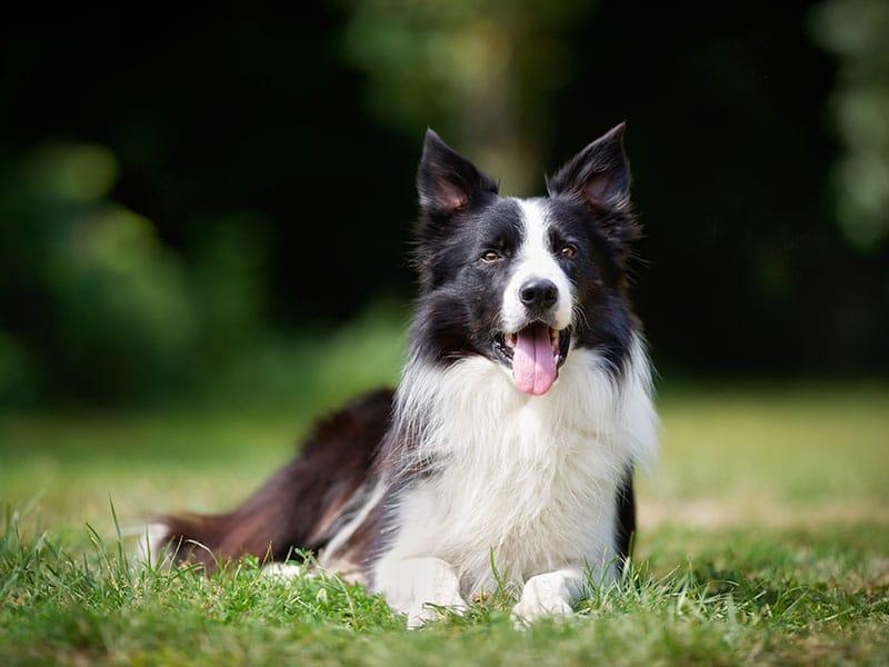 cuantas-palabras-pueden-aprender-los-perros