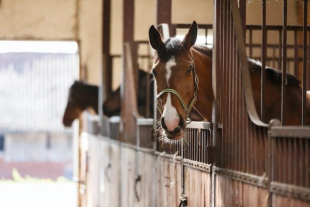 Sospechan que fueron envenenados caballos de establo en Carolina del Norte