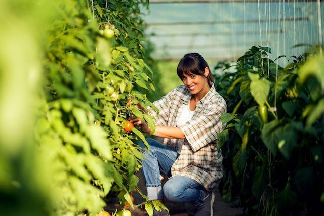 NC State anuncia nueva beca completo en agronomía