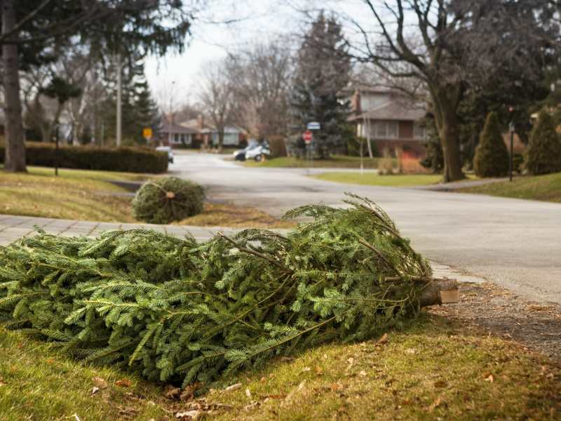 como-deshacerse-de-los-arboles-de-navidad-en-winston-salem