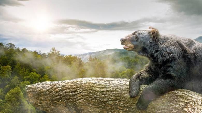 osos-negros-great-smoke-mountains-carolina-del-norte