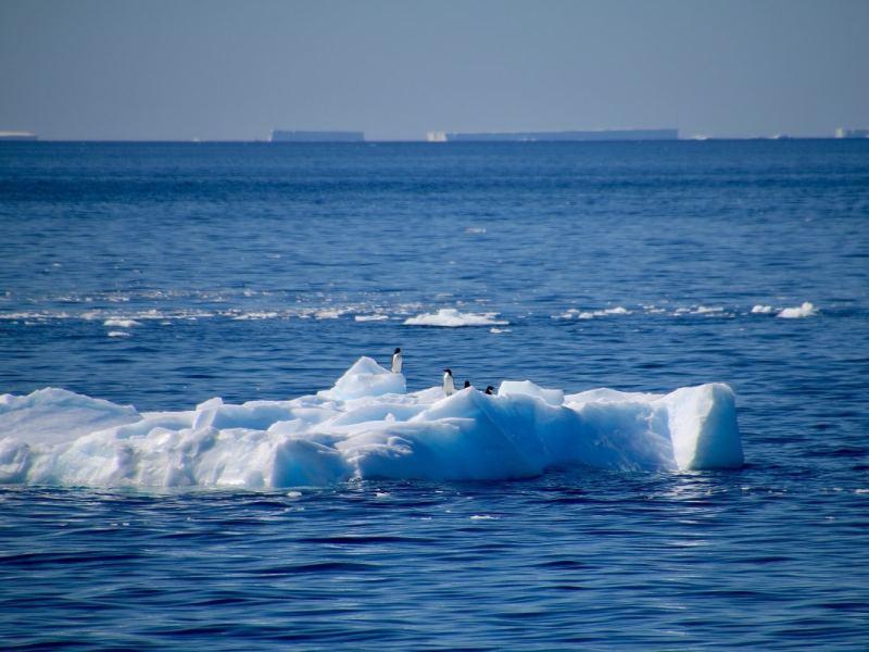 Descubren-Especies-Antártida