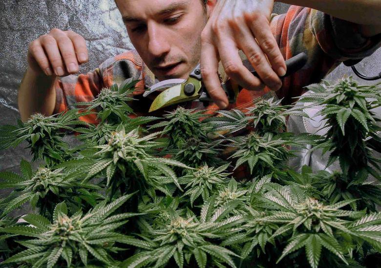 acuerdan-legalizar-venta-de-marihuana-recreativa-en-ny