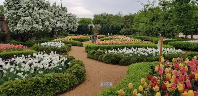 Jardín de tulipanes está celebrando su décimo aniversario