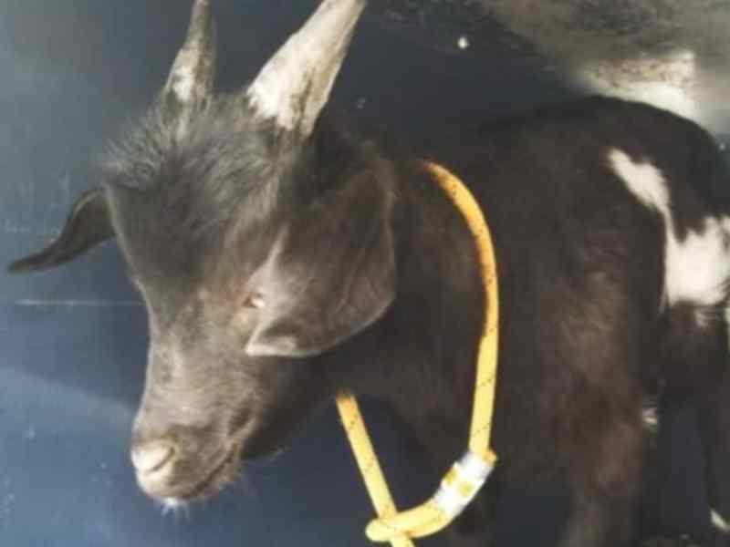 Cabra fue arrestada en North Carolina