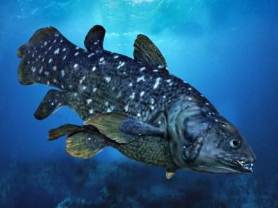 celacanto-el-pez-fosil-gigante-que-puede-vivir-hasta-100-anos