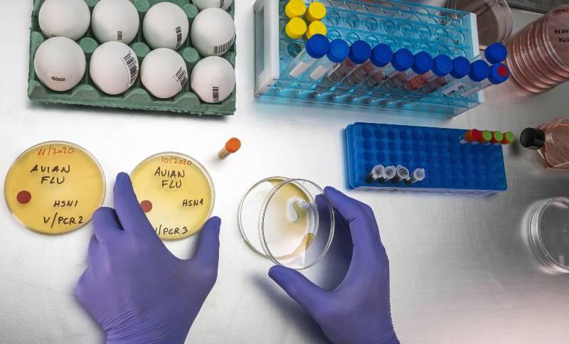 gripe-aviar-h10n3-en-humanos-china-detecta-primero-en-el-mundo