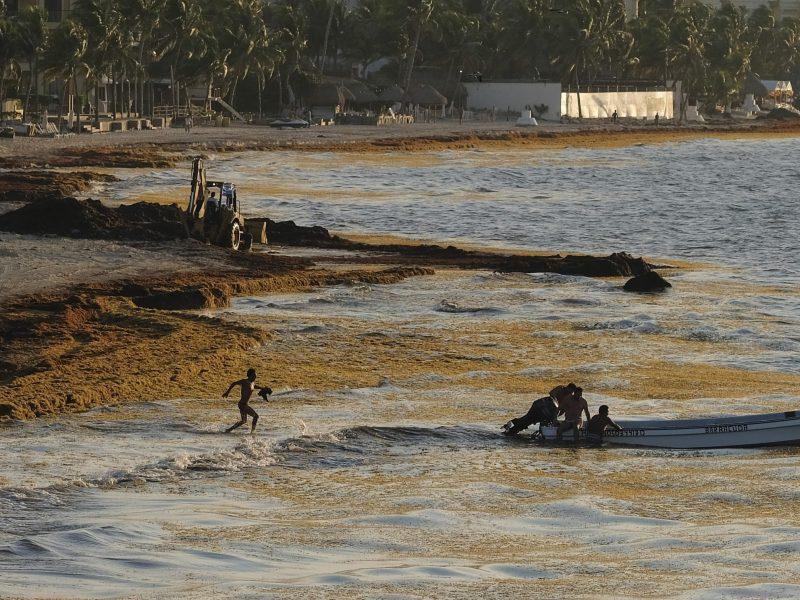 playas-del-caribe-mexicano-afectadas-por-algas-con-olor-fetido
