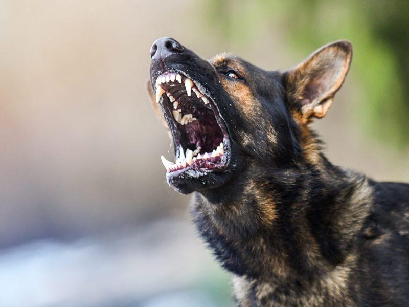 niña mutilada perros arizona