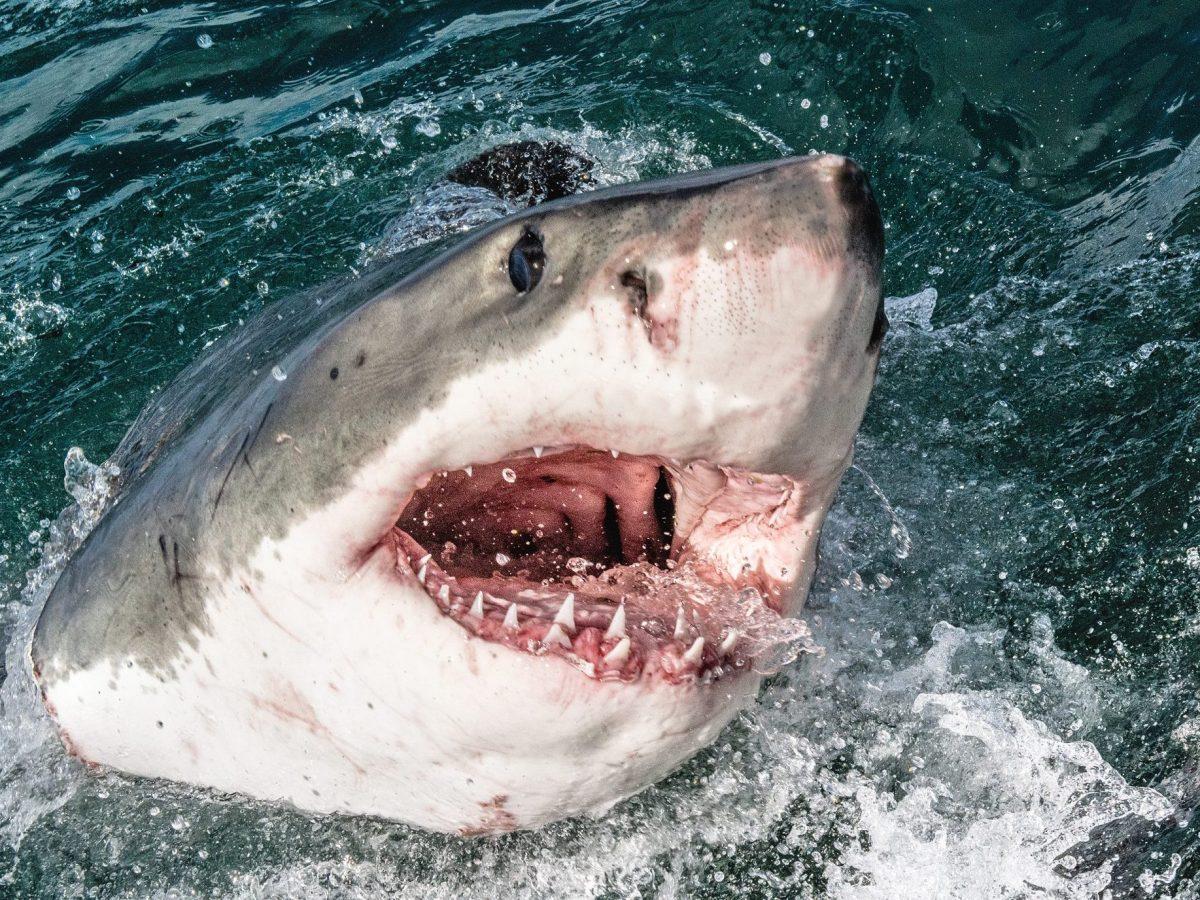 tiburón hombre dron
