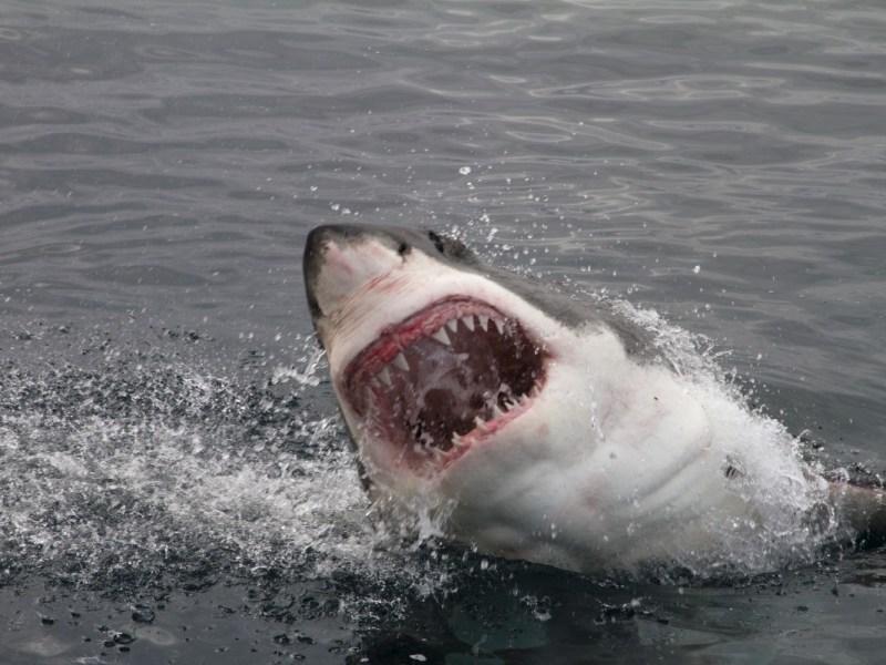 Adolescente posiblemente mordido por tiburón en una playa de Carolina del Norte