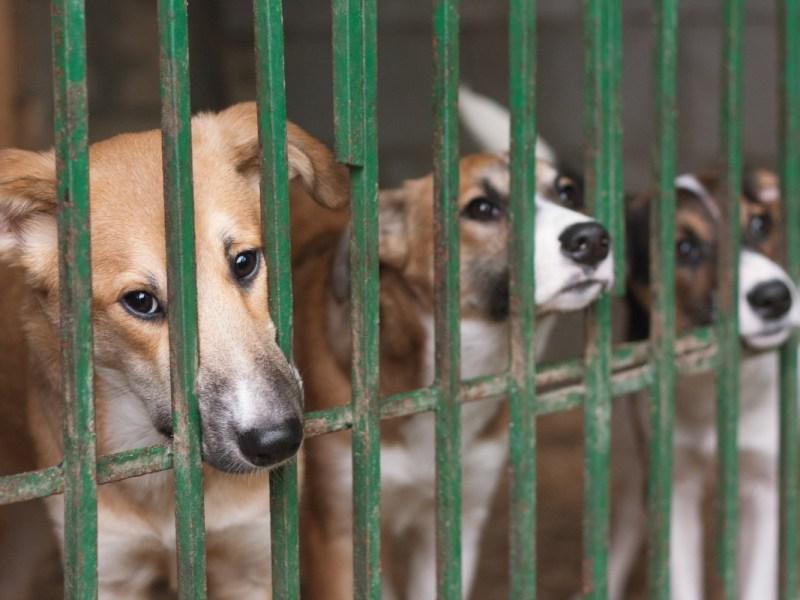Más de 400 animales retirados de un hogar en Carolina del Sur