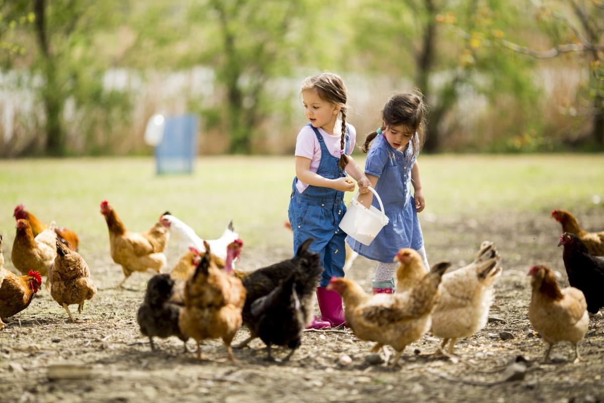 Conoce animales, crea arte y más en este instituto de gallinas en Raleigh