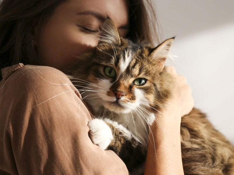Quién se queda con la mascota después del divorcio