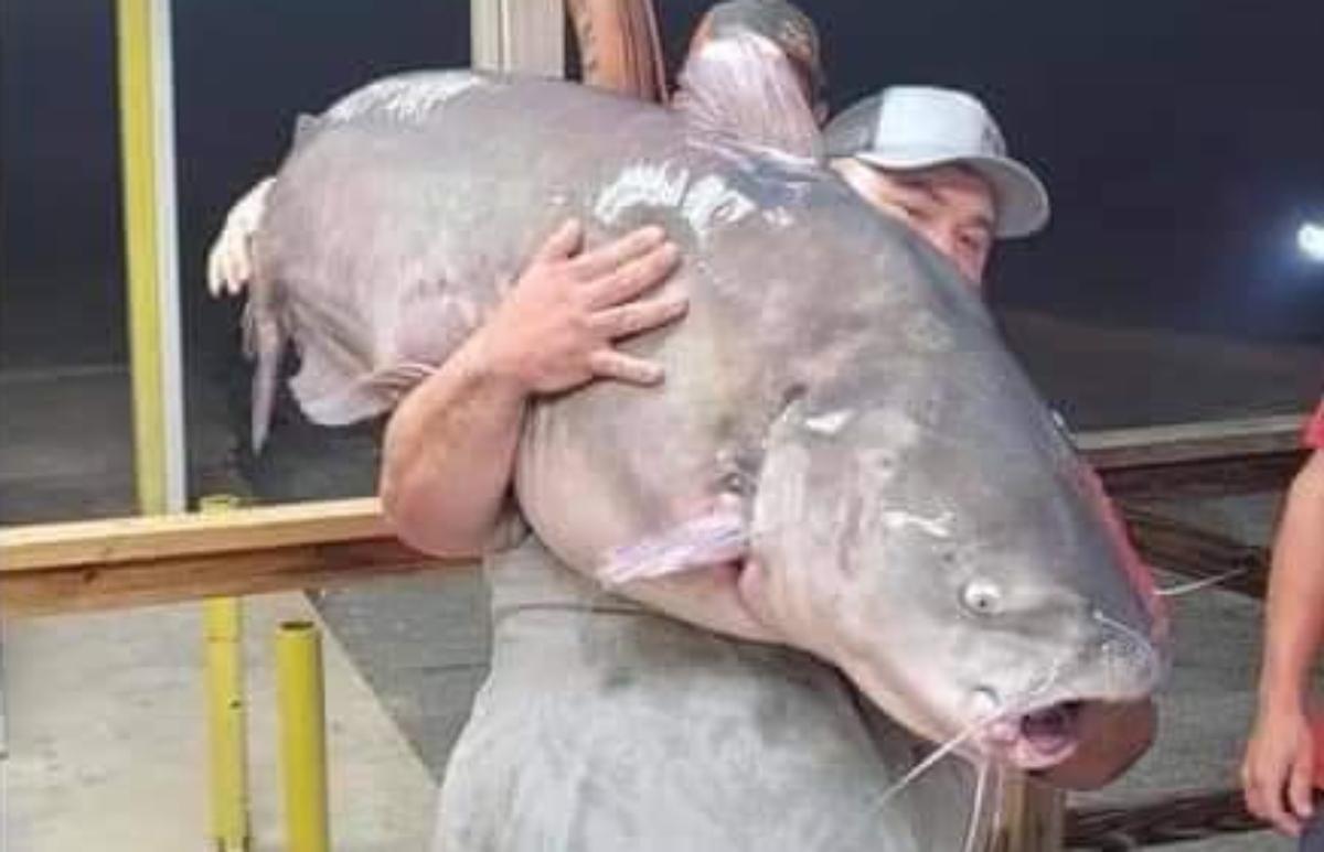 Captura de pez gato