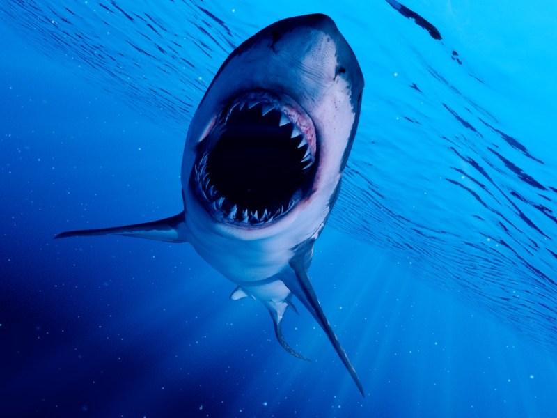 Tiburón muerde a salvavidas en playa de Carolina del Sur