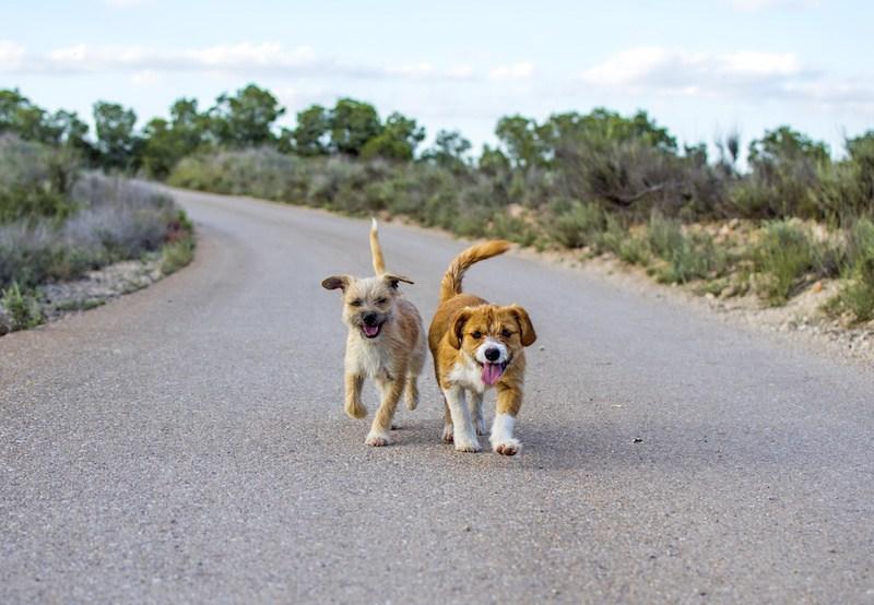 Se estrella camión con decenas de mascotas, muchas están perdidas