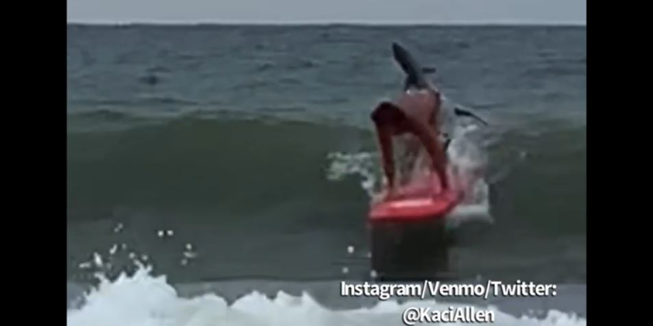 tiburón surfista myrtle beach