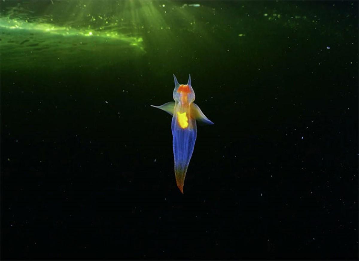 Extraterrestres fotógrafo criaturas mar
