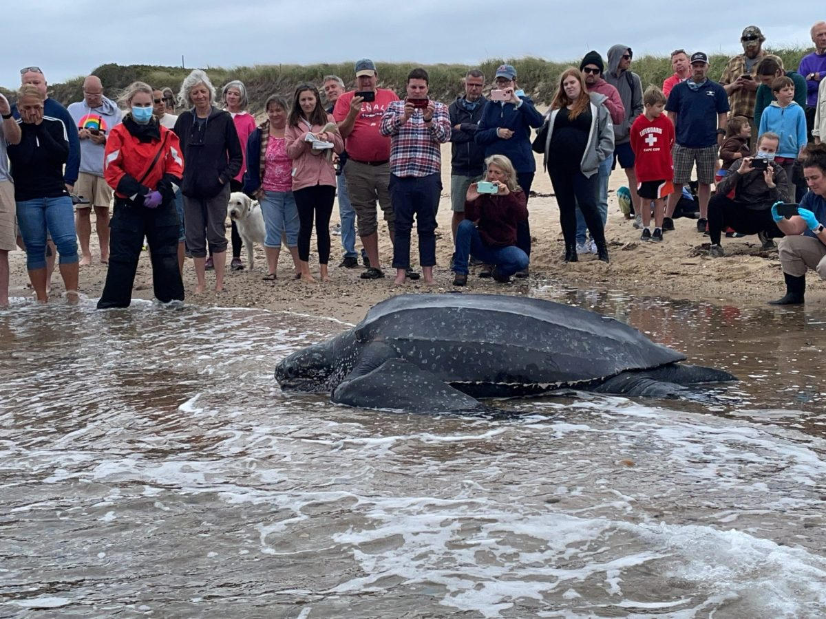 tortuga gigante massachusetts