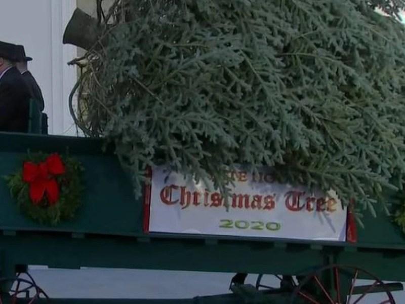 árbol de Navidad NC