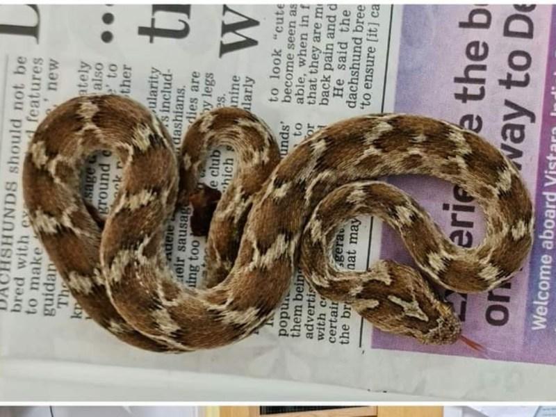 serpiente peligrosa
