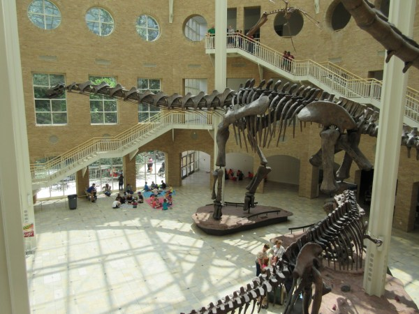 Fernbank Museum of Natural History Dinosaurs