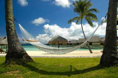 hammock palm trees bungalows bora bora