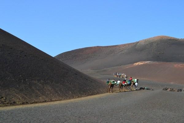 Camels Lanzarote