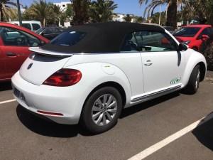 Lanzarote Beetle