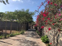 Beautifully planted pathways