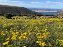 Spring flowers and La Graciosa