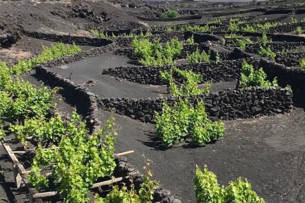 Lanzarote Wine 2018