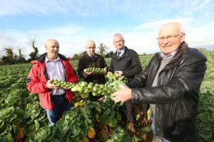 IFA LAUNCH CHRISTMAS FOR GROWERS CAMPAIGN
