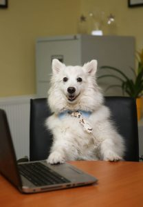 """Dogs Trust Calling On Workplaces To Take Part In """"Bring Your Dog To Work Day"""""""