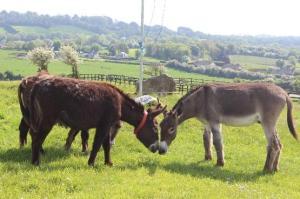 The Donkey Sanctuary Open Day