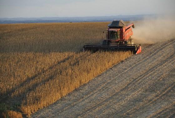 brasil-se-convertira-en-el-tercer-mayor-proveedor-mundial-de-aceite-de-soja-en-2026