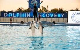 Niega Dolphin Discovery operaciones en paraísos fiscales