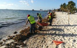 Y como si fuera poco…el sargazo | Recalan en Cancún 180 toneladas en una semana