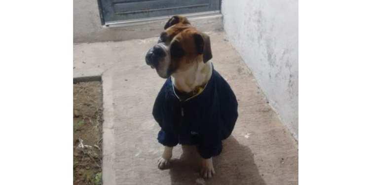 perro Miguel