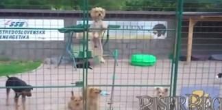 El perro de El Chapo