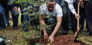 Etiopía ejemplo de reforestación