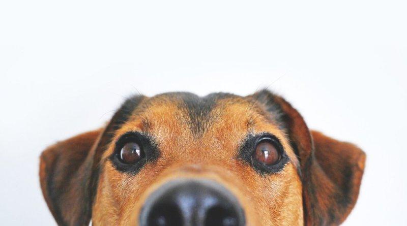 21 de julio Día Internacional del Perro