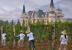Французское наследие китайских вин...