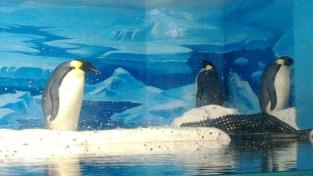 Emporer penguins
