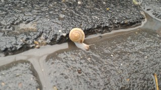 The snail who captured my heart