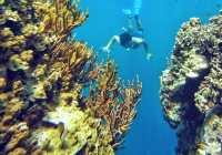 Rekomendasi Wisata Bawah Laut Bali Utara